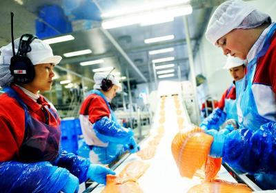 arbeidere fiskerinæringen fabrikk norge